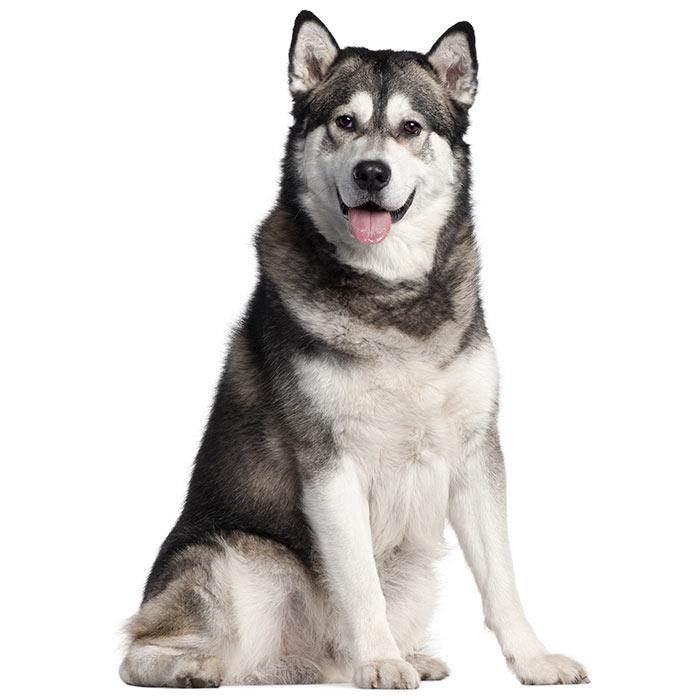 Large Dog Breeds - Big Dog Breeds - Breed Info & Pictures