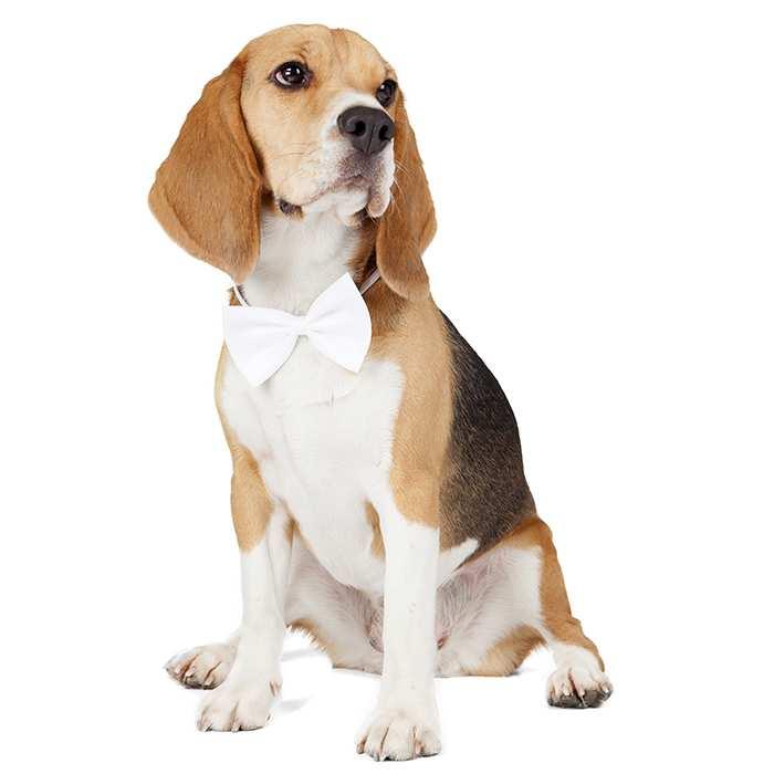 Medium Dog Breeds Medium Sized Dogs Breed Info