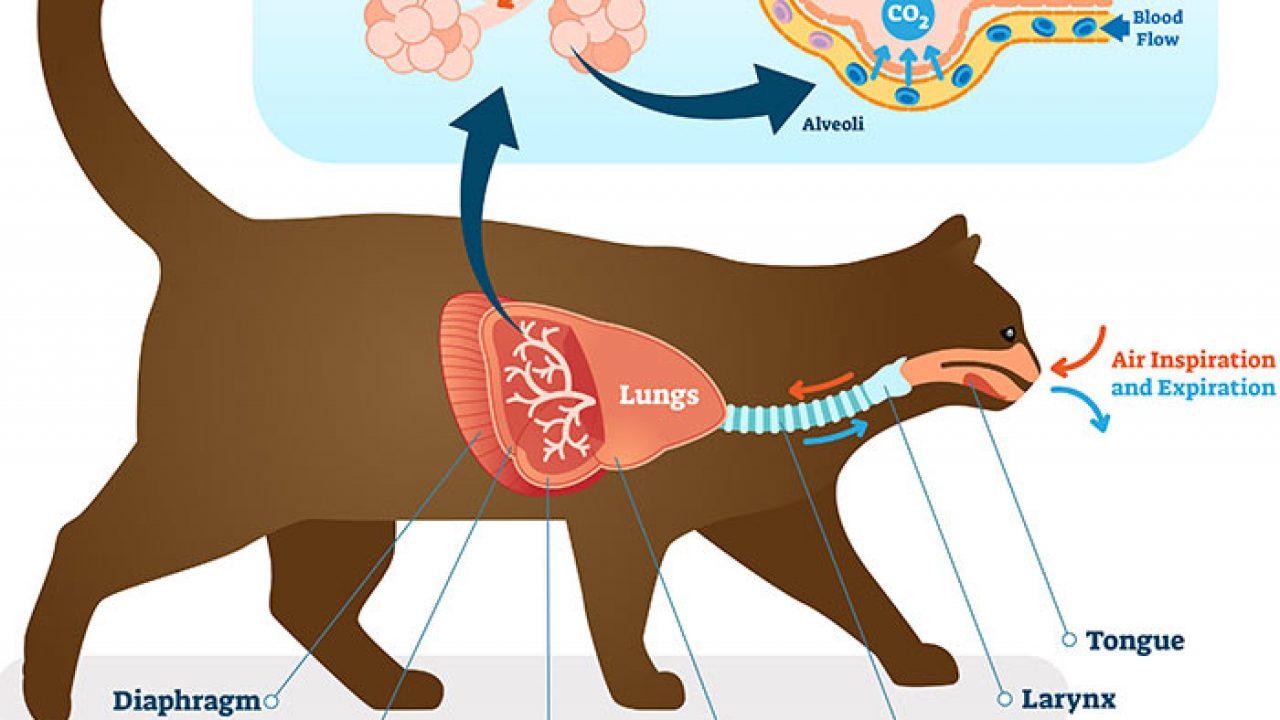 bệnh tiêu hóa và bệnh hô hấp ở chó mèo con
