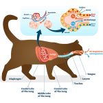 Respiratory tract infection (RTIs) in cats