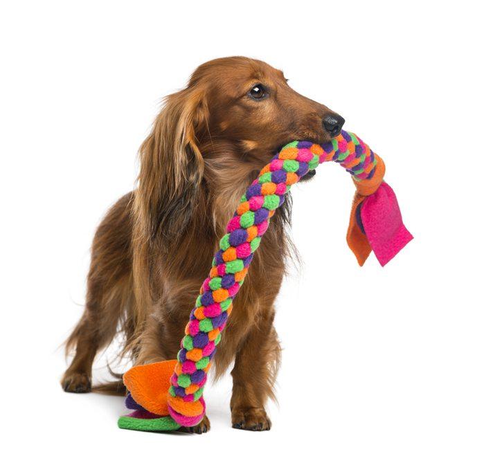 dachshund-tug-toy