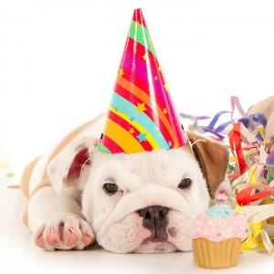 Plan The Perfect Birthday For Your Dog