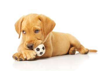 Dog chewing a ball