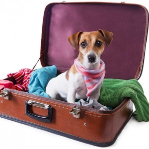 Preparing To Travel By Air With Your Pets