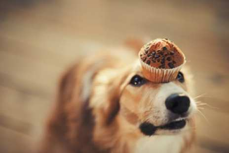 golden-dog-with-cake-on-head