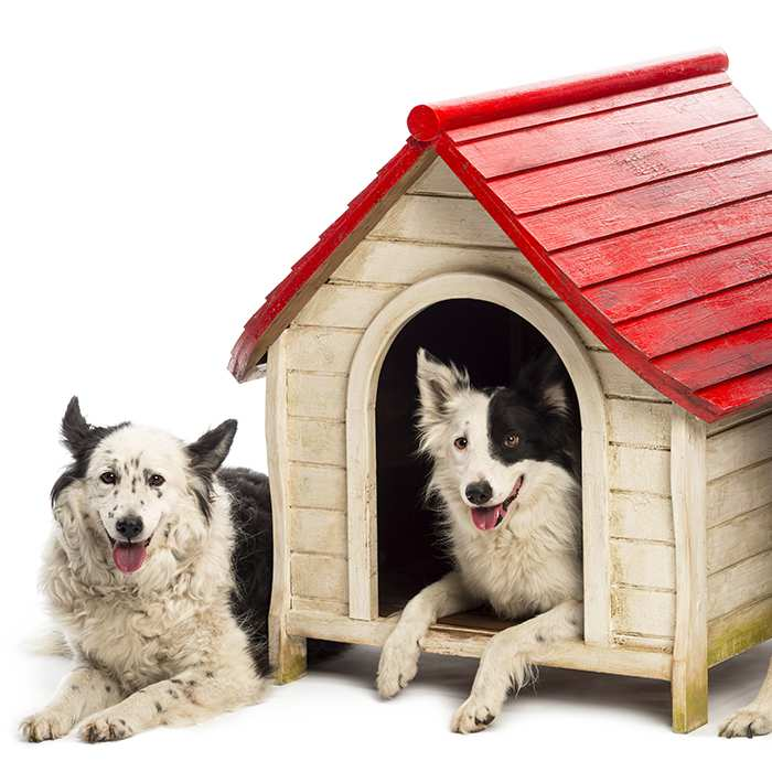 herding-dogs-at-their-wooden-kennel