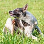 Stop the itching – What you need to know about allergies in dogs