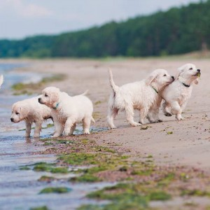 Puppy Buyer's Guide on Where to Get a New Puppy From