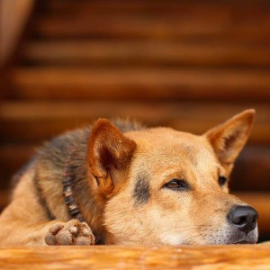 5 Tips To Avoid Separation Anxiety In Dogs