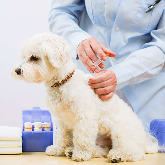 Puppy and dog vaccination schedules and vaccination costs