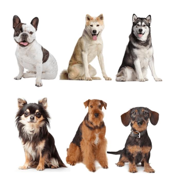 Best Dog Insurance >> Dog Insurance Best Pet Insurance 2019 Bow Wow Meow
