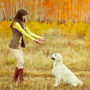 owner-and-her-yellow-labrador-in-dog-training