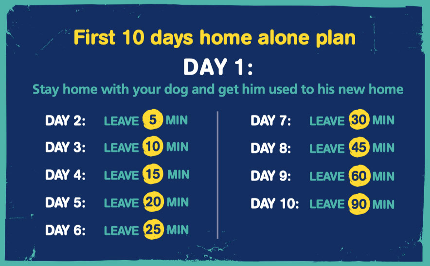 rescue dog plan separation anxiety home alone plan