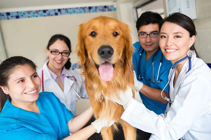 Team of veterinarians