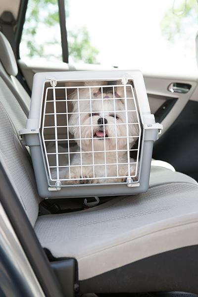 maltese in transport box in car