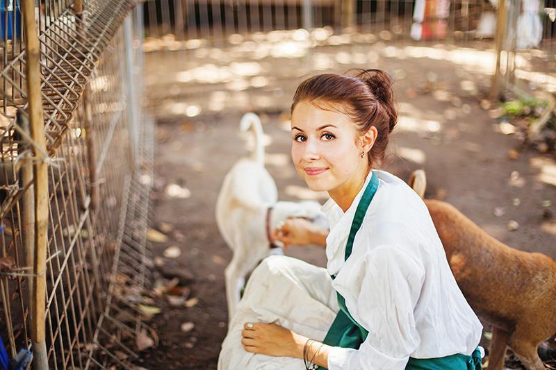 Veterinarian at dog shelter volunteering
