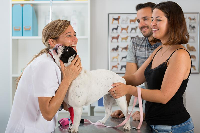 veterinarian with clients and french bulldog