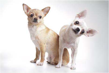 Two small dogs