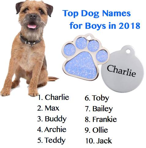 Top boy dog names