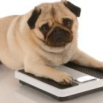 How to help your dog to lose weight