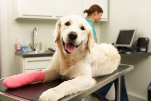 Dog accidental injury cover