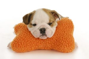 Puppy snoozing on pillow
