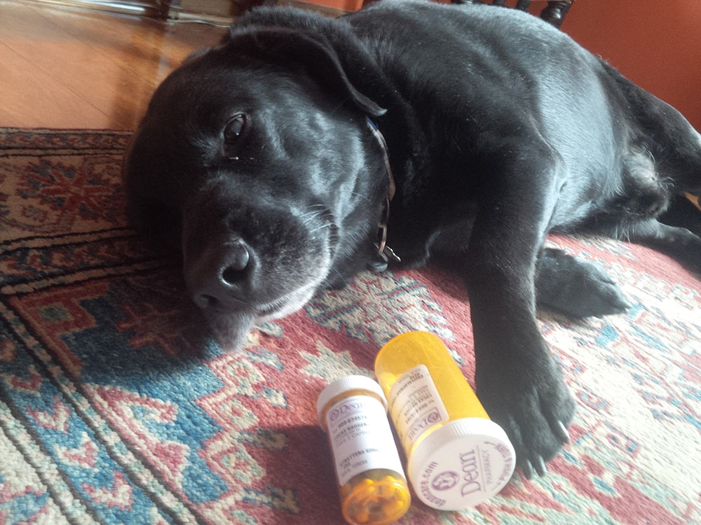 Drug poisoning in dogs. Drug poisoning in cats. Dog poisoning symptoms; signs of poisoning in dogs; cat poisoning symptoms