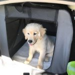 Road trip 101: Driving with pets
