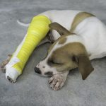 Fracture of pelvic limb in dogs and cats