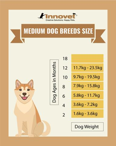 Dog Growth Chart - Medium Size Dogs, Example of the Medium Breed include: Afghan Hound, Airedale Terrier, Australian Cattle, Australian Shepherd, Basenji, Basset Hound, Beagle, Border Collie, Boxer, Chow Chow, Cocker Spaniel, English Bulldog, English Pointer, German Pinscher, Keeshond, Kerry Blue Terrier, Labradoodle, Miniature Bull Terrier, Shetland Sheepdog, Siberian Husky, Skye Terrier, Stafford Bull Terrier, Standard Schnauzer, Whippet