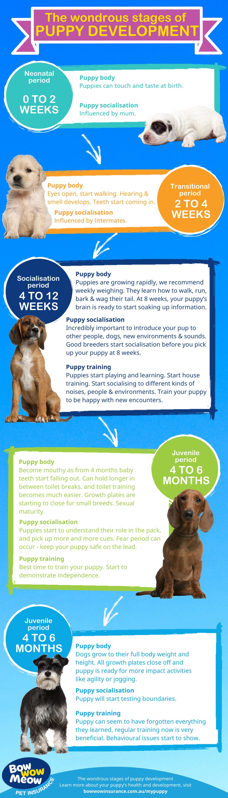 Puppy Development Stages Newborn Milestones Growth Charts