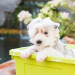 Puppy care & health: how to care for your new puppy