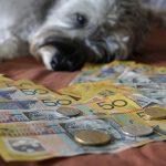 Are cheap pet insurance policies worth it?