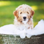 Puppy grooming tips
