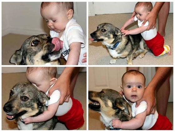 babyanddog-leerburg
