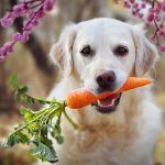 Good and bad human foods - What to feed and what to not feed your dog