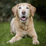 Health concerns facing older dogs & tips on how to care for senior dogs