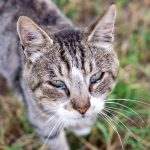 Allergies in cats - What you need to know