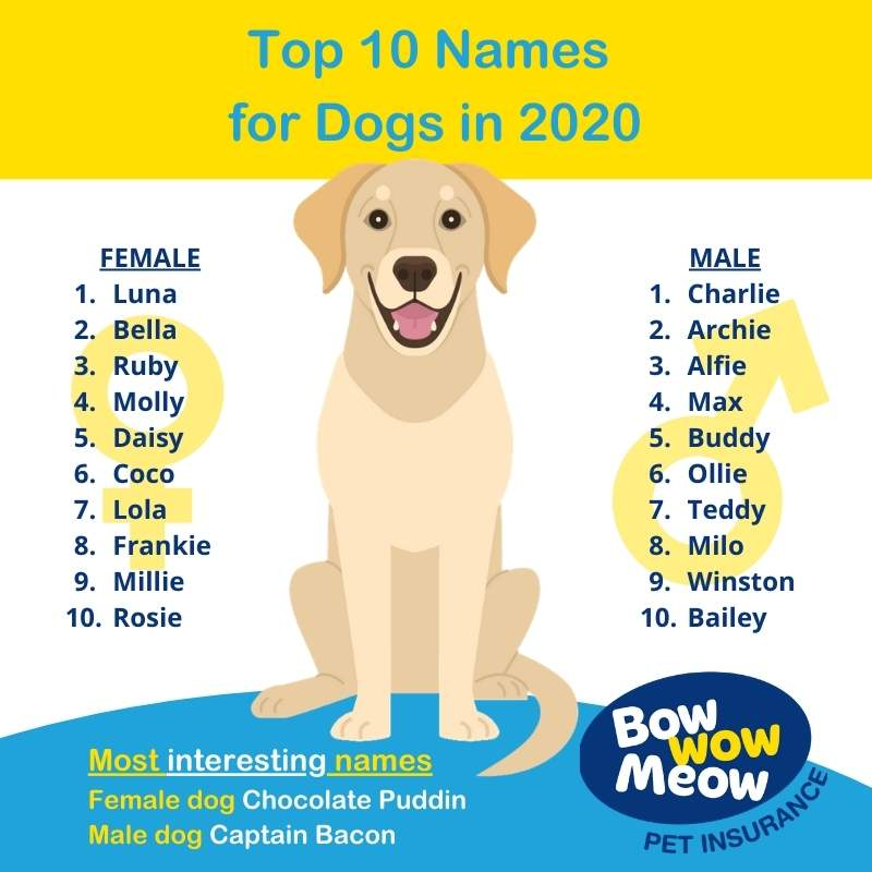 Australia's most popular Dog Names Female and Male in 2020