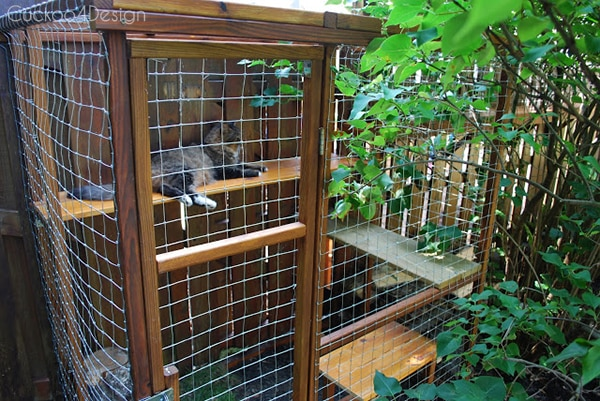 Cat enclosure at the end of the fence tunnel