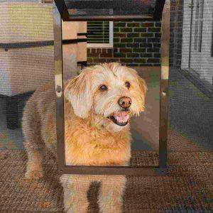 PetSafe Screen Pet Door